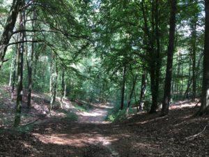 Rodelbahn im Wald