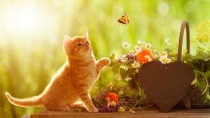 junge Katze spielt mit Schmetterling sitzend vor einem Korb mit Heilkräutern und einem Herz mit Textfreiraum